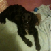 Renewed Appeal for Owners-Spaniel Cross