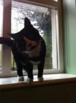 Black/white cat lost in Kilmurray