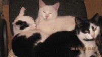 Four cats missing in Mogeely