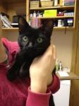 Kitten found in Midleton