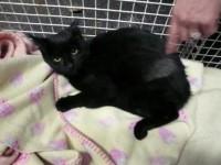 Black kitten found at Cork University Hospital