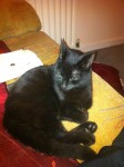 lost female black cat in glanmire.