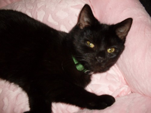 Female Black Cat Lost In Youghal Co Cork Munster Lost