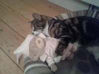 Black and grey tabby lost in Mallow