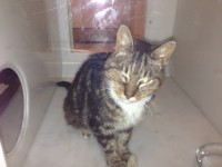 Very Friendly Tabby Cat Found 12-15 years in Cork City