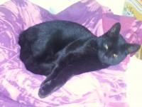 "6 month Black kitten ""Maxi"" Ballincollig recently neutered"