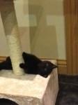 black kitten lost in Castle Rock Midleton