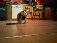 female tabby cat found in Blackrock Cork