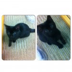 Young black cat, very friendly and well kept. Found in Limerick City.