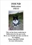 Found Cat in Ballycotton