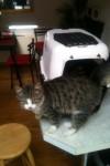 Lost cat in Albert Road area