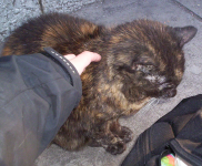 Blind Tortoiseshell cat (female?) found on MacCurtain Street Cork City