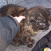 Blind Tortoiseshell cat (female?) found on MacCurtain Street Cork City