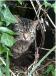 Tabby cat St Lukes area