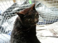Female Cat found in Ballycotton