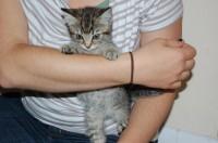 found little stray kitten near blackpool in cork