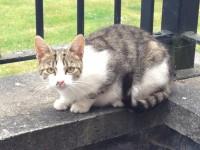 Female Cat found in Turner's Cross area
