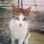 Female cat found in Youghal