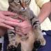 Male cat found model farm road