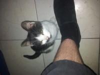 Black and white kitten found in Donnybrook Cork