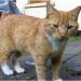 Male cat lost in Cork
