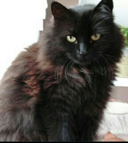 Black Fluffy Cats | www.pixshark.com - Images Galleries ...