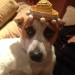 Jack Russell lost in Carrigaline