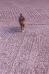 Cat found in Upper Glanmie Business Park