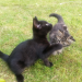 two lost kittens in glanmire (3+ months old)
