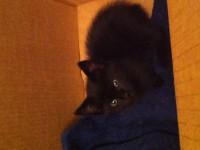 Kitten found in Watergrasshill