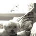 White Bichon Frise missing from Rochestown