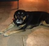 Lost Dog in Bantry West Cork