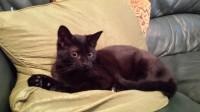 Female kitten lost in Midleton