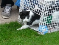 Black & white cat missing in Killeagh