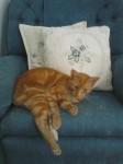 Female cat lost in Killorglin, Co. Kerry