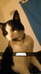 Male cat lost in Oola, Co. Limerick