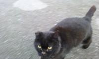 Black cat found in Shanagarry