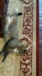 Female tabby cat lost in Hop Island, Rochestown