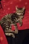Male Tammy Cat Missing – Blackrock / Mahon