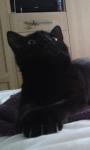 Lost Black Cat – Carrigaline