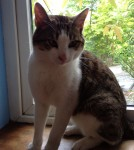 Lost Cat Carrigtwohill