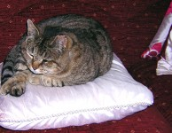 Grey Tabby Male Neutered Cat Lost In Knocklong Co.Limerick