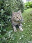 Male tabby cat lost in Kinsale