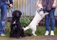 Two much loved pets missing from Kerry