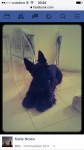 Male Scottish Terrier lost in Inishannon
