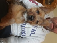 female pup lost in mallow
