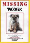 Woofer – Pug/Terrier cross small brown dog