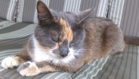 Female cat lost in Cork