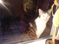 Found Tabby & white cat in Lower Aghada