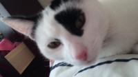 Lost cat in Glencarin, Dooradoyle